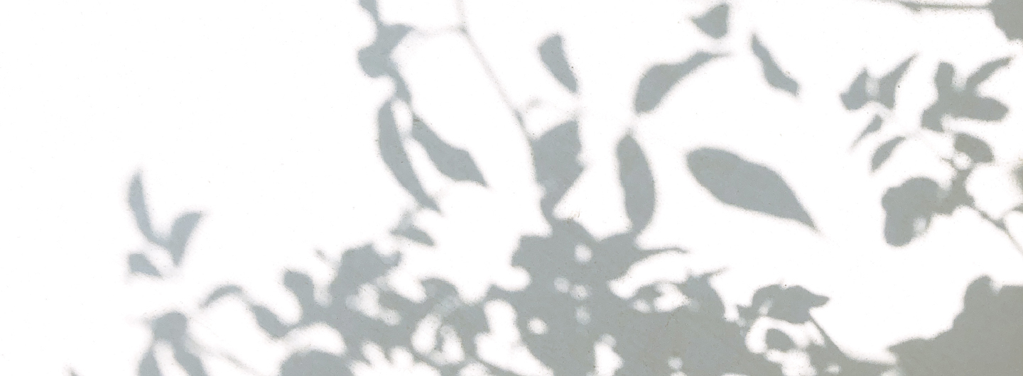 shadow of plant on white background